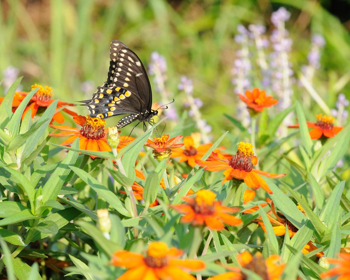 Butterflies82409_001
