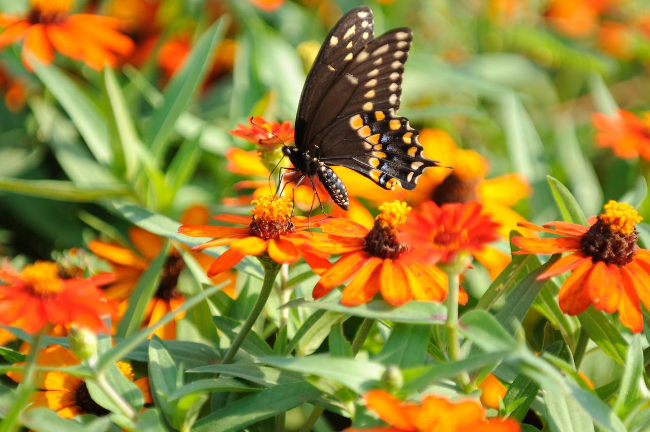 Butterflies82409_027
