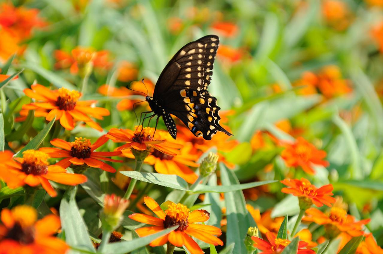 Butterflies82409_030