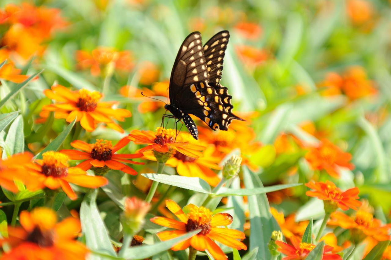 Butterflies82409_032