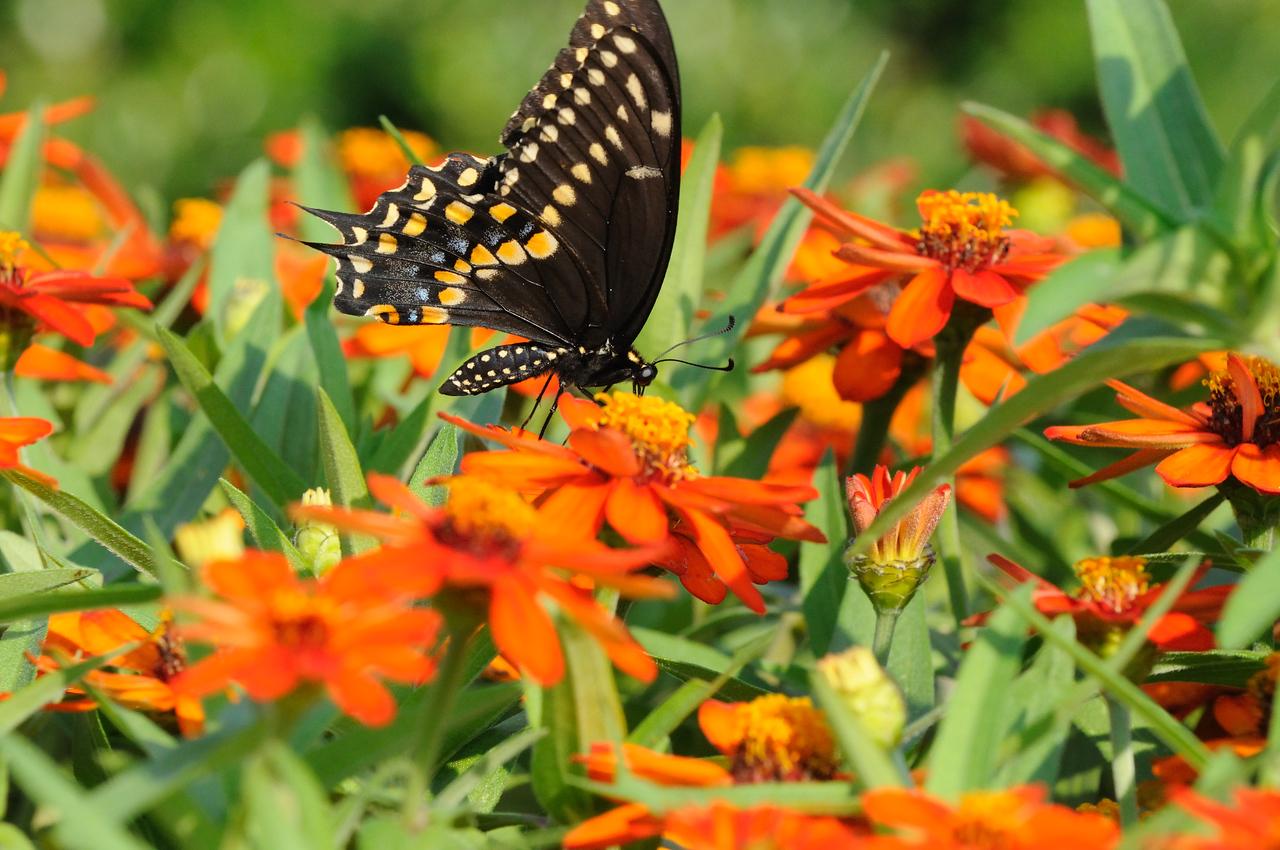 Butterflies82409_011