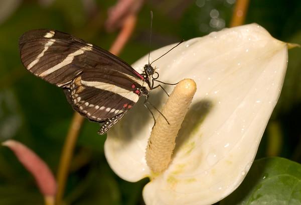 Butterflies - Callaway Gardens