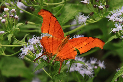 Butterflies, Dragonflies, Other Insects