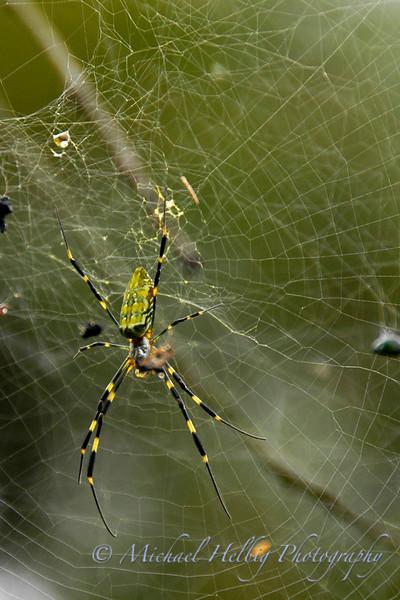 Spider - Hiroshima