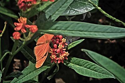 Butterflies Epcot 2017