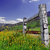 Rustic fence with yellow fiddleneck wildflowers, lower Sierra Nevada foothills, CA.