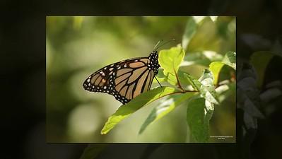 Birds Bugs Butterflies 2020-A