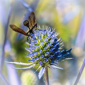 A wasp?