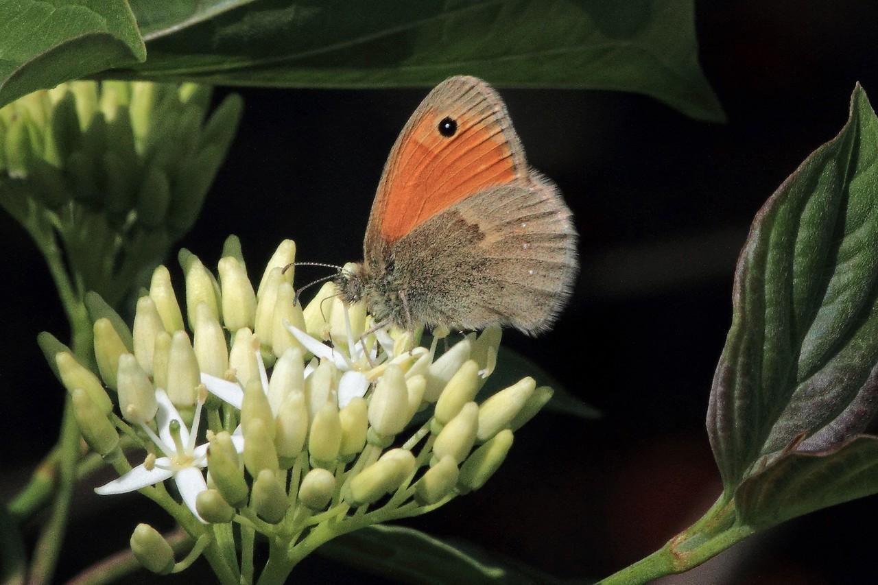 small black-spotted Orange