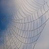 Creation Museum, spider web