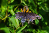 frazzled, but not quitting