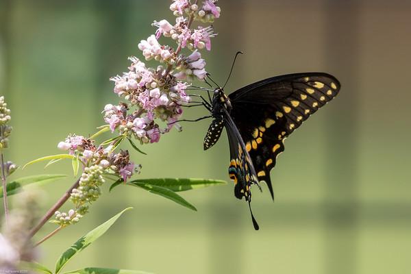 Butterflies, flowers 2018