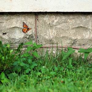 Butterflies in the Wild