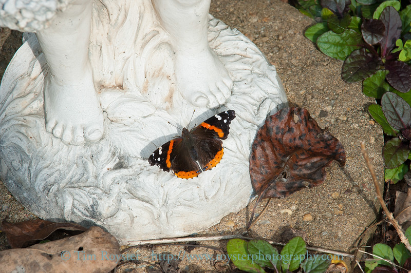 Red admiral butterfly at base of lawn statue
