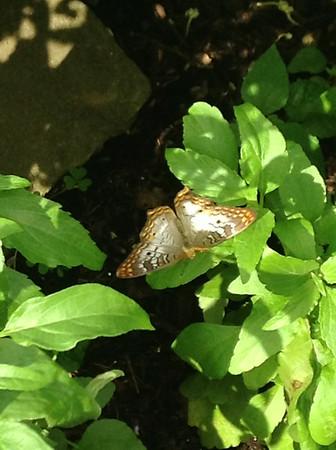 Butterflies on flowers