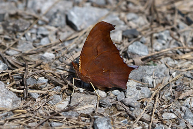 Question Mark at Bell's Bend Park, Nashville, TN (09-25-2010) - 091