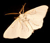 00aFavorite 20100518 A moth through back door (2337p)