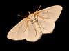 00aFavorite 20100518 A moth through back door (2340p)