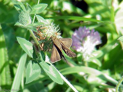 Dun Skipper above at Lookout Mountain Count (7-15-00)