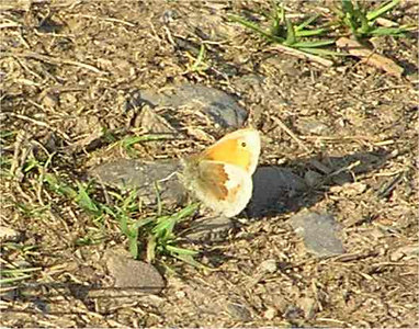Small Heath. Lakes June 2005