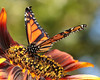 Monarchs 09-30-06 016ps2