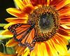 Monarchs 09-30-06 015ps2