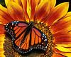Monarchs 09-30-06 006ps2