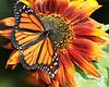 Monarchs 09-30-06 059ps
