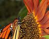 Monarchs 09-30-06 083ps