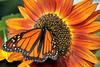 Monarchs 09-30-06 029ps