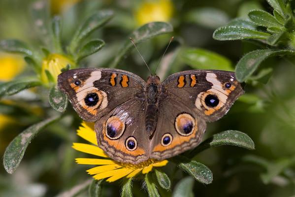 Phoenix Desert Botanical Garden Butterfly Exhibit