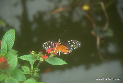 Straffan Butterfly Exhibition