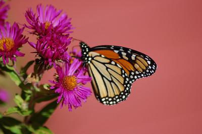 Butterflies_2006-10-08_20