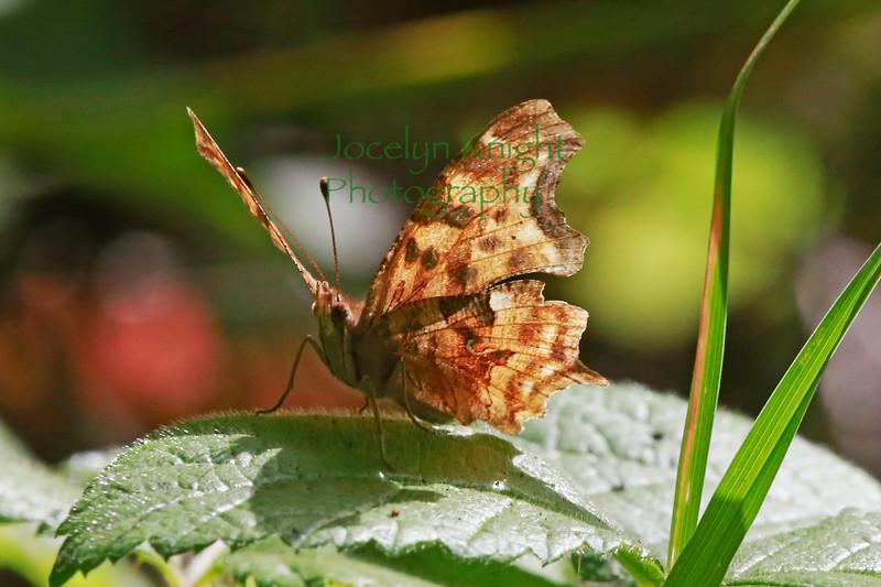 Butterfly8754