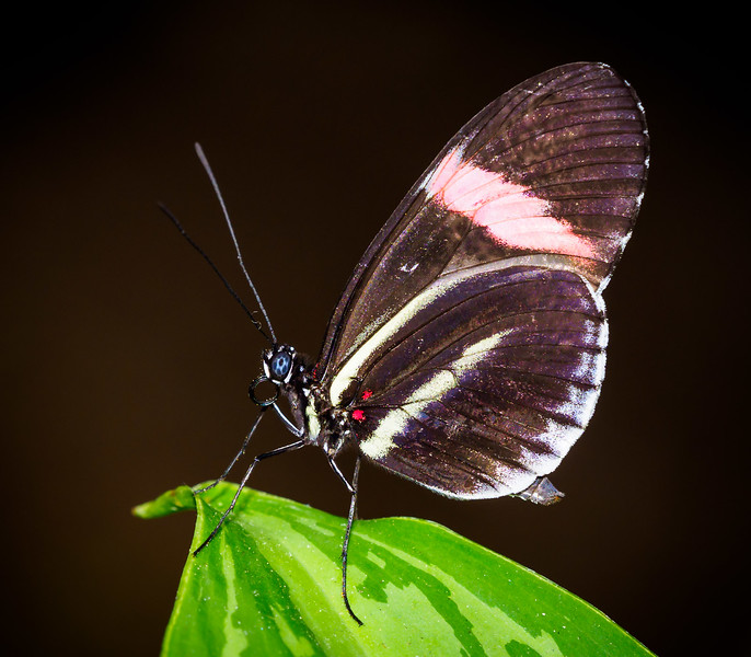 Butterfly Jungle - 22 Mar 2018
