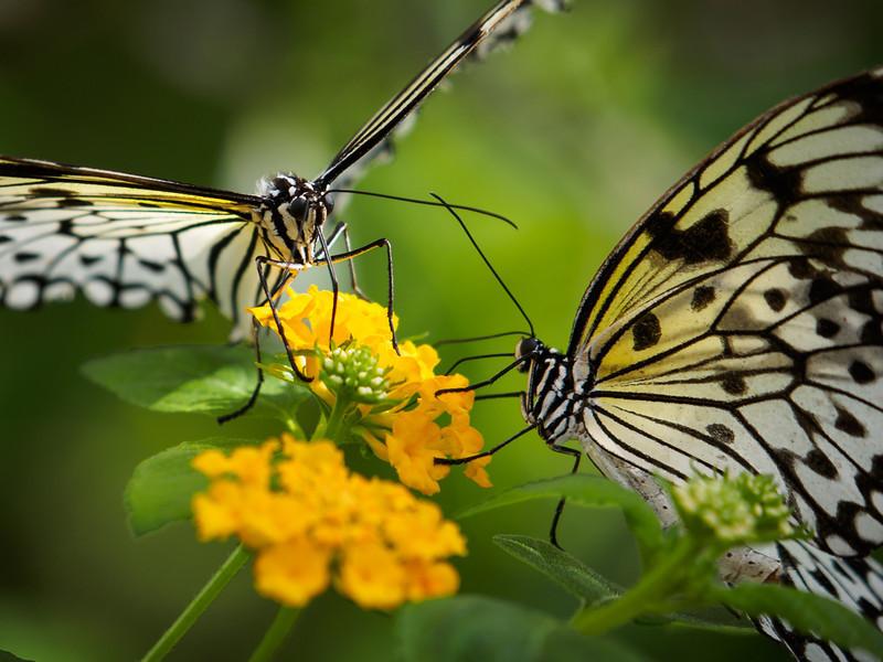 Paper Kite - Butterfly Wonderland - 28 Mar 2014