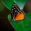 Butterfly Wonderland - 20 Nov 2020