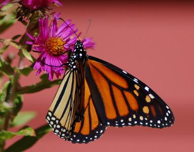 Butterflies_2006-10-08_4