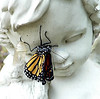 Newly hatched monarch butterfly on cherub