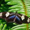 Butterfly Wonderland - 20 Nov 2020