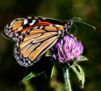Monarch  09 16 09  027 - Edit