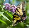 20130817_Butterflies_171