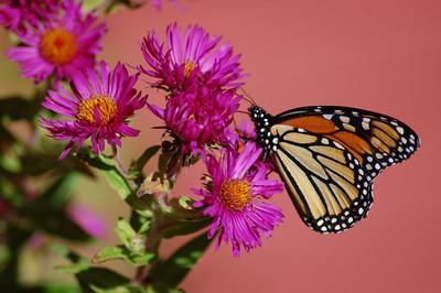 Butterflies_2006-10-08_21