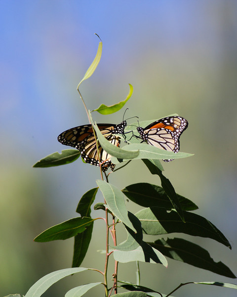Butterfly Intimate Meeting