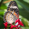 Butterfly Wonderland - 29 Jan 2017