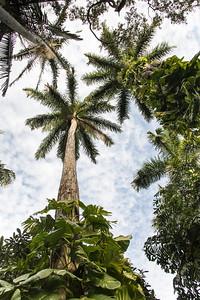 Palm Tree Jungle