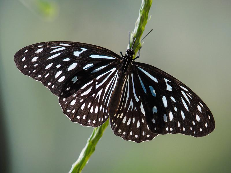 Butterfly Jungle - 24 Apr 2014