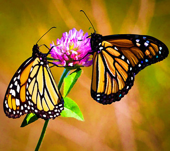 Monarch  09 16 09  013 - Edit