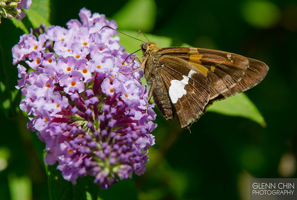 20130817_Butterflies_50-Edit