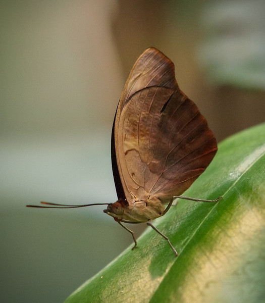 Butterfly Jungle - 29 Mar 2012